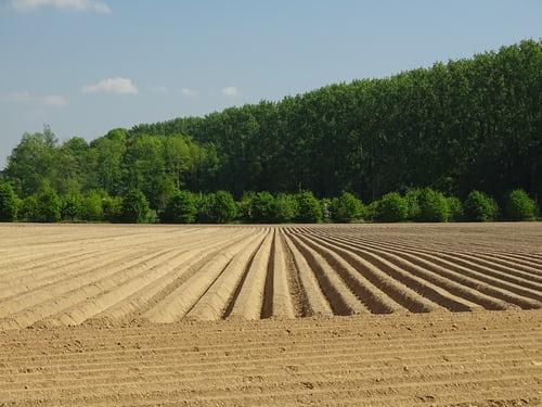Quand planter et récolter des pommes de terre ?